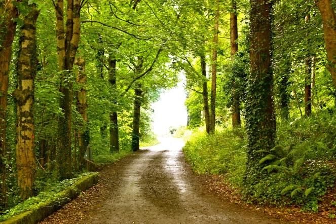 Ireland summer 2012 365